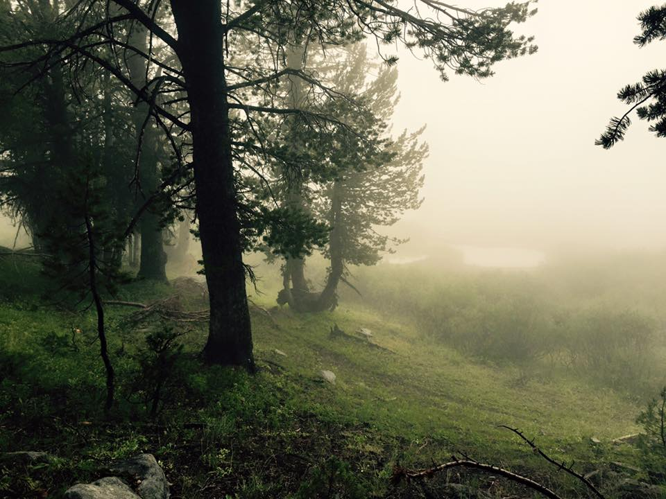 Misty trees on the Ruby Crest trail.