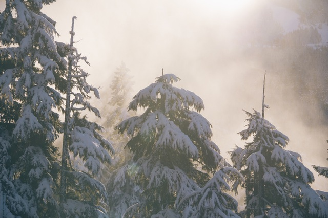 A cold forest covered in snow.